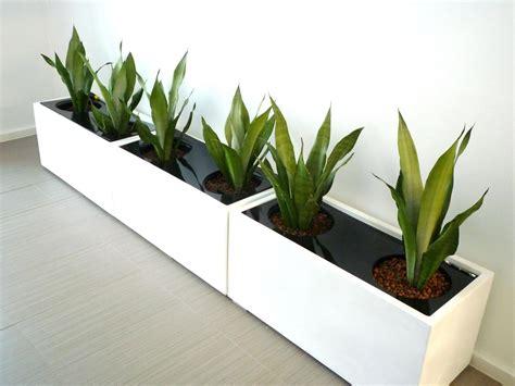 large indoor planter large indoor plant pots melbourne indoor planters