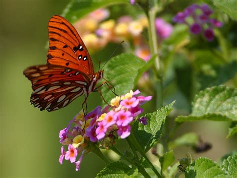 a butterfly butterfly