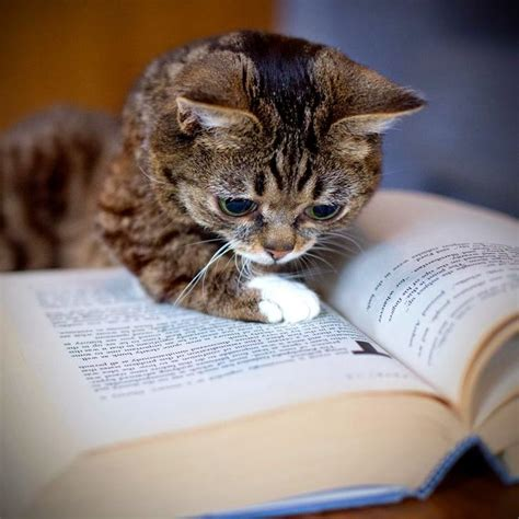 cat picture books 580 best images about reading books and cats on
