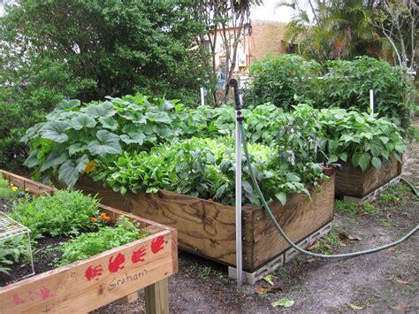 vegetable gardening in south florida soil solarization for raised gardens