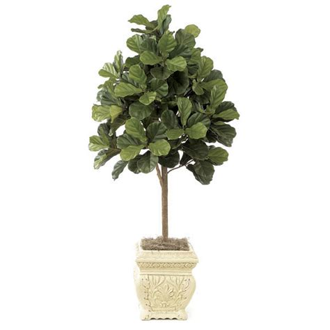 potted tree 5 foot fiddle leaf fig tree potted w 2320