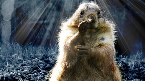 groundhog day of groundhog day has roots in astronomy astronomy