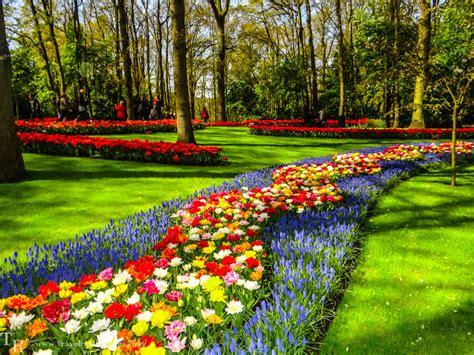 netherlands flower garden keukenhof flower garden near lisse netherlands stock photo