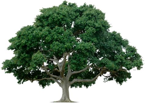tree pic tree png images pictures free