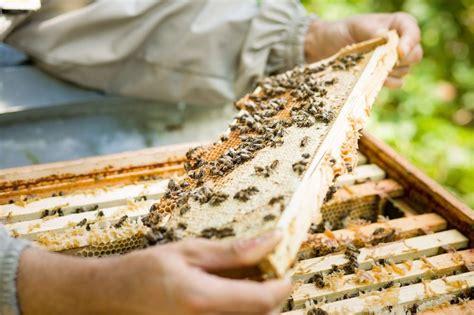 Honig Englischer Garten München by Kleine Geile Firmen 4 Bio Honig Aus Schwabing