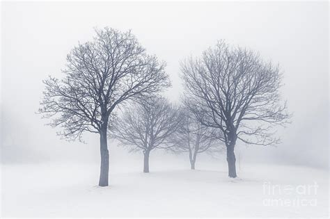 winter trees winter trees in fog photograph by elisseeva