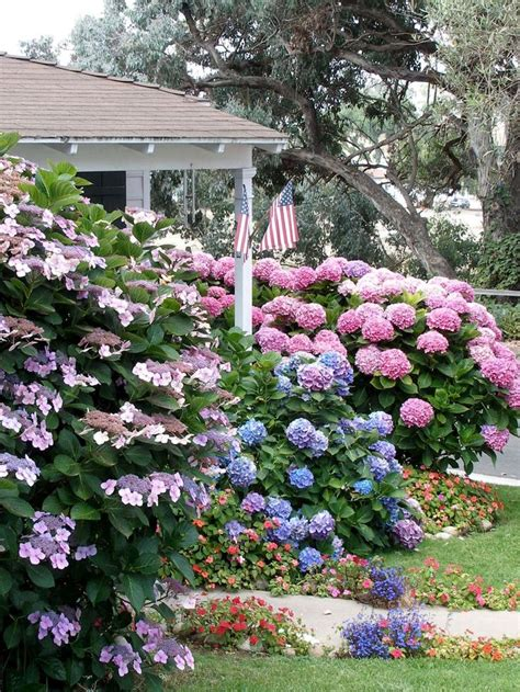 flowers shade garden 25 best ideas about shade landscaping on