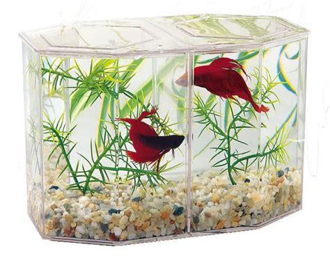 les 25 meilleures id 233 es de la cat 233 gorie aquarium betta sur