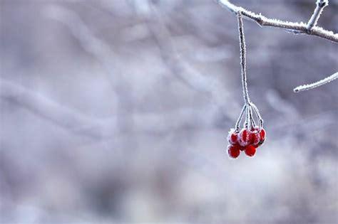 Der Garten Im Dezember by Gartenratgeber F 252 R Dezember Und Januar