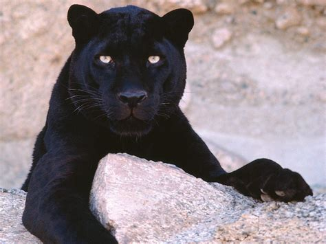 world of reading black panther this is black panther level 1 world images gallery black panther