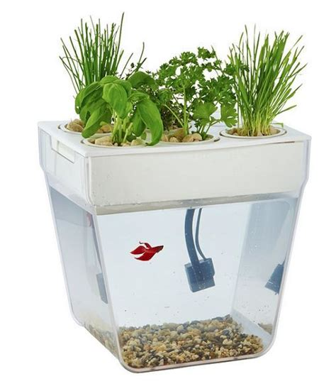 hydroponic vegetable garden kit aquaponic garden system organic hydroponic growing