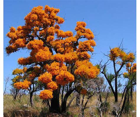 tree shop moosic pa hours western australia tree rainforest islands ferry