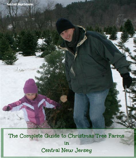 somerville tree farm the complete guide to tree farms in central