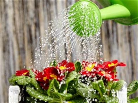 water for plants tips to water your plant boldsky