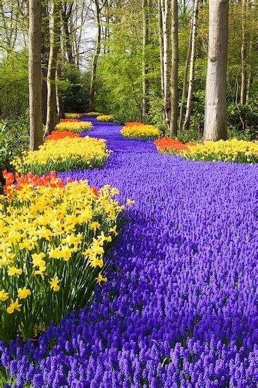 netherlands flower garden keukenhof world s largest flower garden