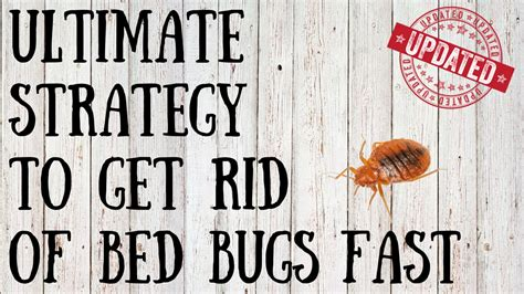 Get Rid Of Bed Bugs Fast by How To Get Rid Of Bed Bugs Yourself Tips For