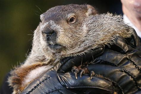 groundhog day information five facts about groundhog day