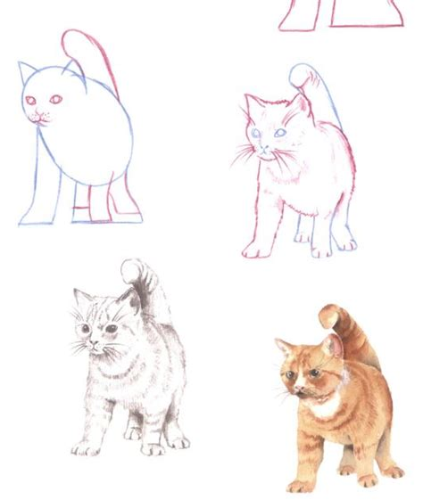 cat step step 10 tutorials on how to draw a cat in black