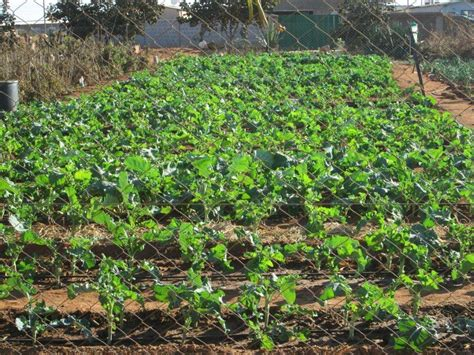 Garden Bulawayo Zddt Development Democracy Trust Bulawayo S