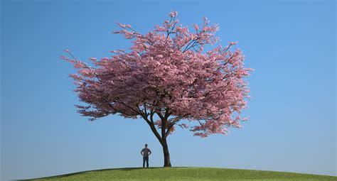 cherry blossom tree 3d model free 3d japanese tree bark