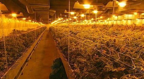 cannabis une production fran 231 aise ce que nous avons retenu articles actualit 233 s