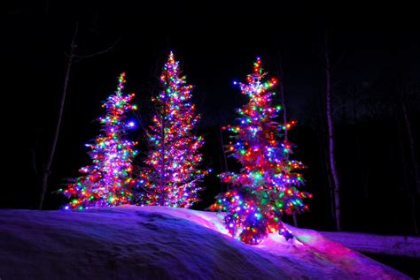 tree with colored lights ideas residential lights installation utah brite nites