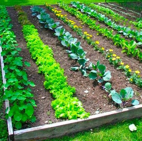 how to make a small vegetable garden 17 clever vegetable garden hacks vegetable garden