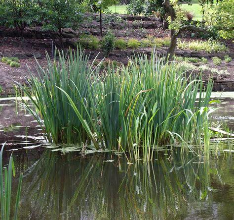 water for plants file watergardenplants jpg