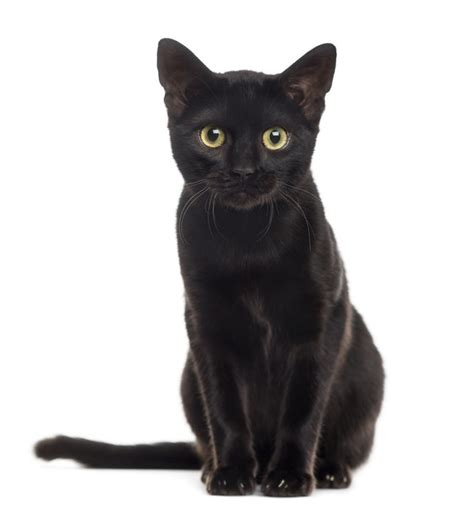 cat black stop hating on black cats it s national black cat day