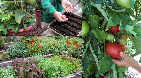 growing vegetable garden growing a vegetable garden epicurious epicurious