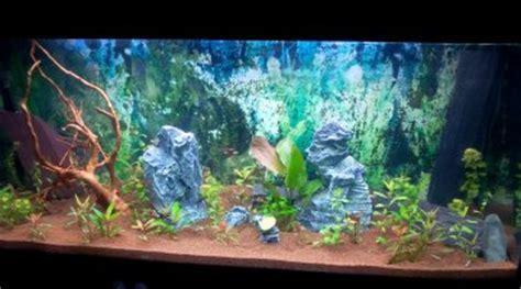 choix de poisson pour un aquarium de 600 litres