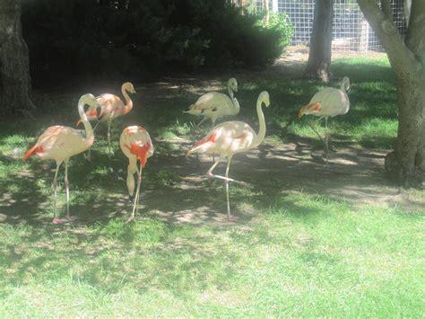 Garden City Zoo Richardson Zoo