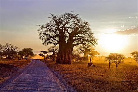hd tree wallpaper baobab tree hd nature 4k wallpapers images backgrounds
