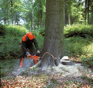 cutting tree should forest trees be cut made by at