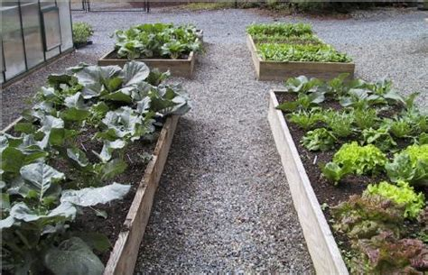 winter vegetable garden plants fall and winter vegetable planting guide