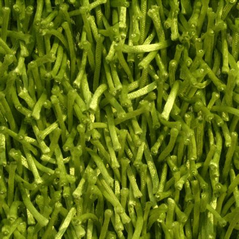 lime green area rugs lime green shag area rug decor ideasdecor ideas