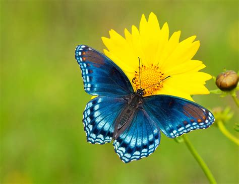 of a butterfly 5 tips for photographing butterflies mnn nature