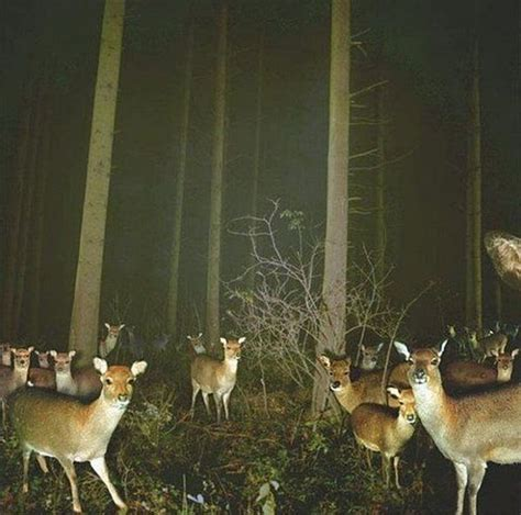 animal cam 10 times hidden cams revealed what animals do when nobody