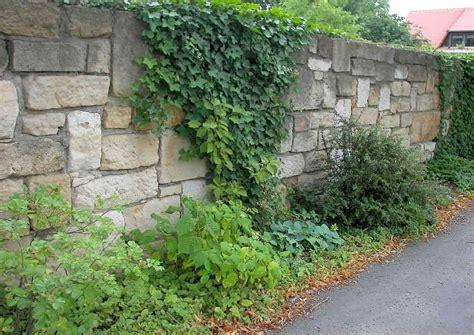 Die Garten Oder Der by Sichtschutz Vorgarten Ideen Mauer Zaun Oder Pflanzen