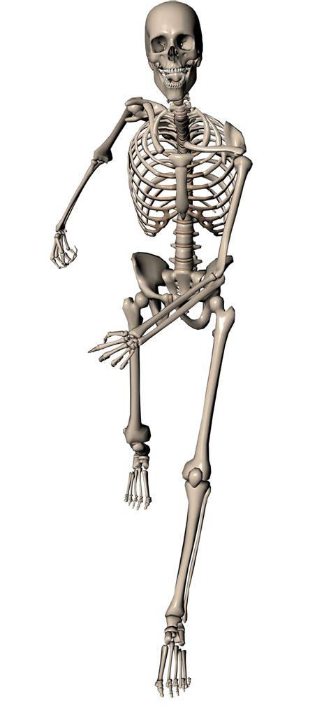 a skeleton skeleton running by markopolio stock on deviantart