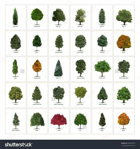 type of trees 29 best trees images on plants landscaping