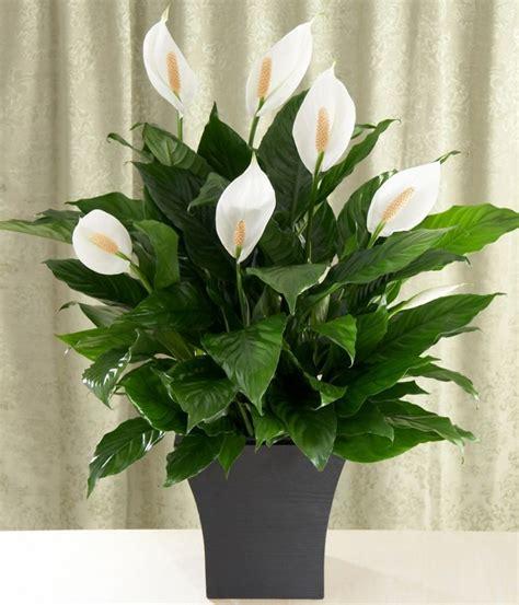 plantes vertes d int 233 rieur 40 propositions pour changer votre ambiance