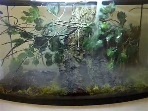 tree setup mossy tree frog setup