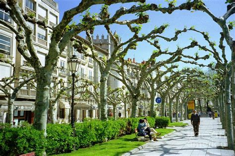 trees in spain spain burgos trees photograph by ted pollard