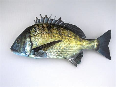 paper craft fish papercraftsquare new paper craft black seabream fish