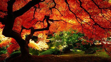 Der Garten Der Toten Bäume by Die 66 Besten Herbst Hintergrundbilder