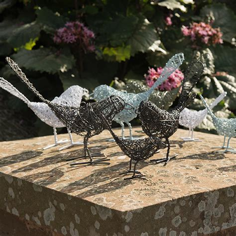 baby wire buy baby wire bird delivery by crocus