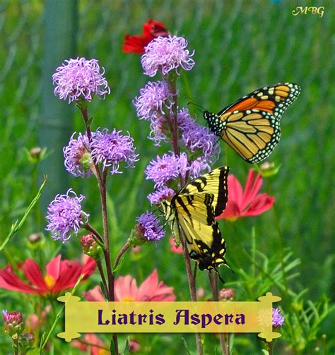 list of garden flowers with pictures butterfly plants list butterfly flowers and host plant ideas