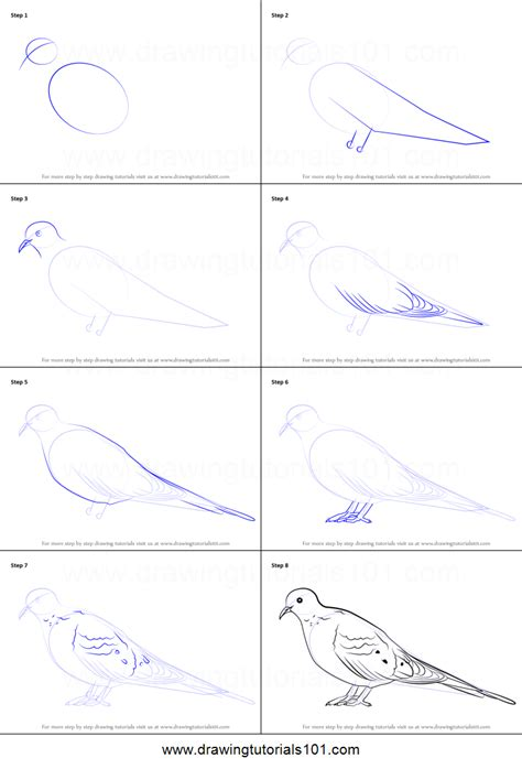 step by step how to draw a mourning dove printable step by step drawing