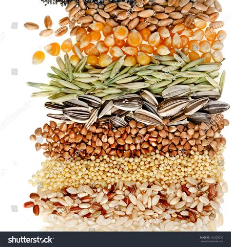 how seed are made cereal grains seeds rye wheat barley stock photo 142228030